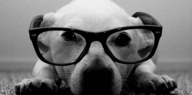 chien photo noir et blanc